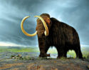 Unknown artist's depiction of a mammoth.